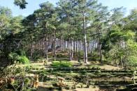 Đà Lạt, Vietnam - Park Prenn December 2019